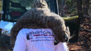 Western Cats Training Videos